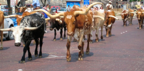 slow longhorns to graduate  times of texas